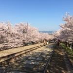 京都の美しい桜が集中する蹴上〜岡崎のおすすめ観光ルート