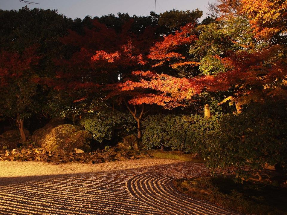 圓徳院 秋のライトアップ