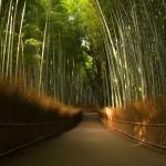 桜も紅葉も新緑も絶品!京都 嵐山のおすすめ観光ルート