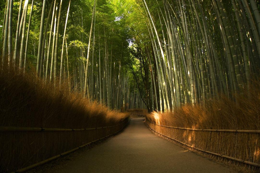 嵐山の竹林