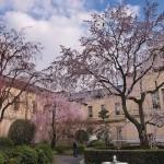 桜の季節は必見の二条城〜京都御所エリア おすすめルート