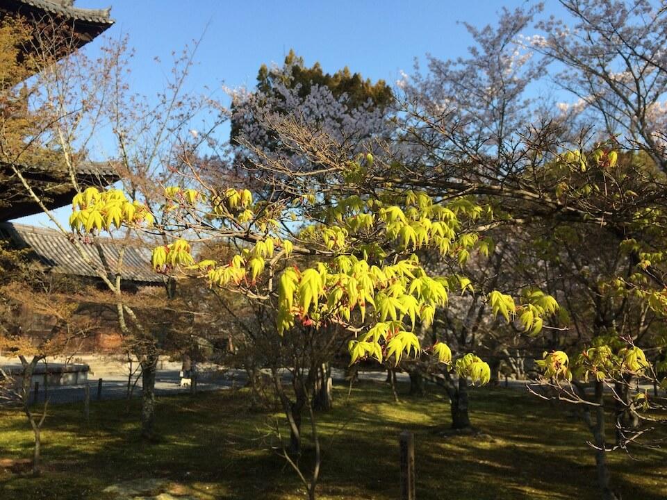 南禅寺の新緑