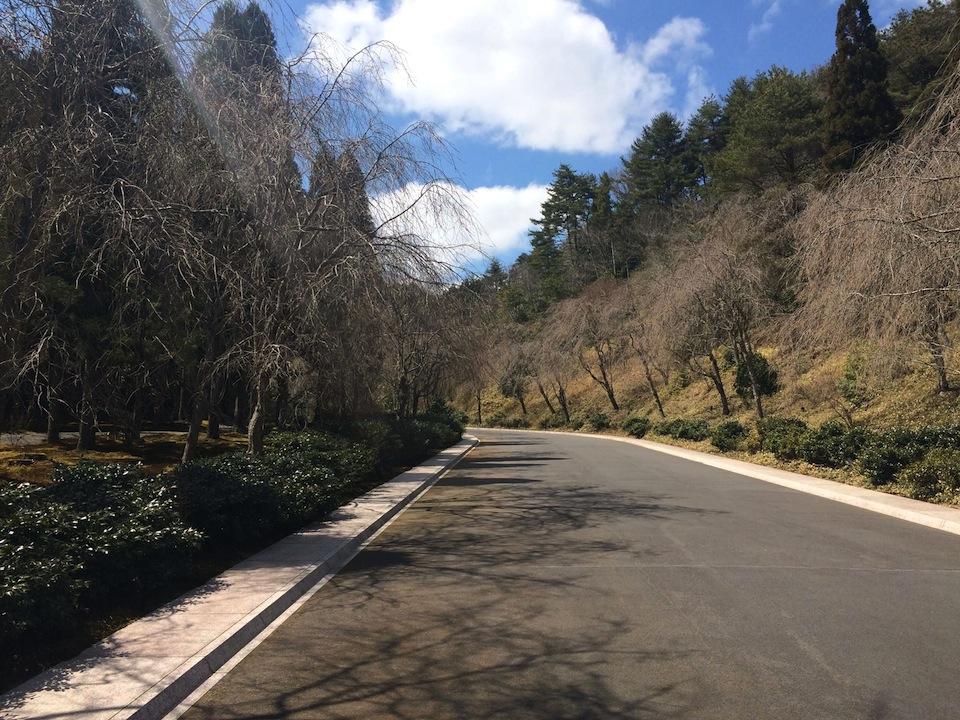 レセプション棟から美術館へ続く桜並木