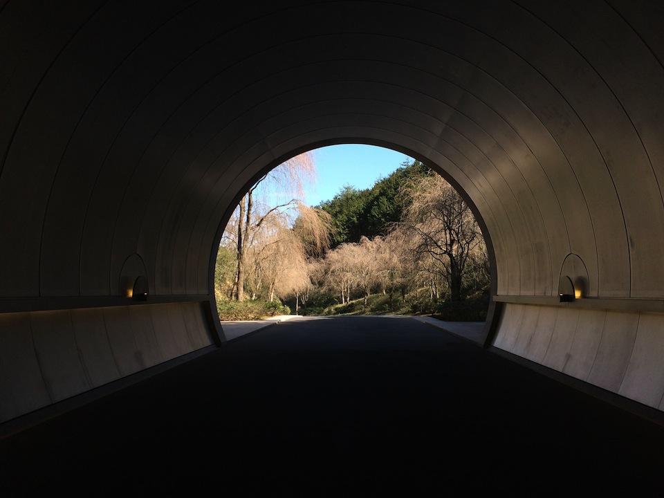 トンネルからしだれ桜を眺める